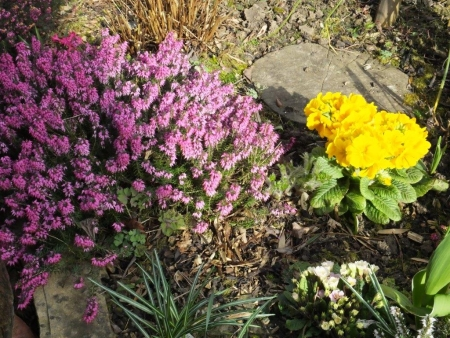 Polyanthus and Heathers