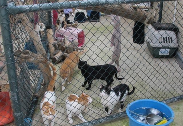 Kar Cats are a happy family