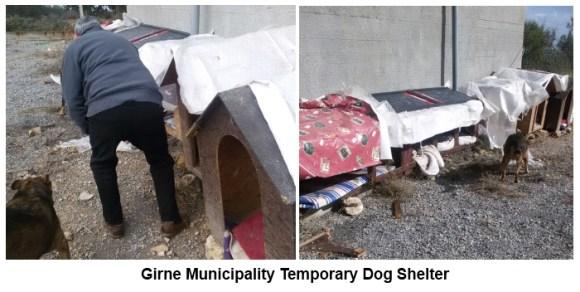 Girne temporary dog shelter kar pictures 1