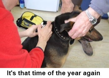 Registration and micro chipping of dogs