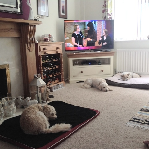 Snoozing by the tv