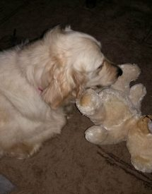 Lily with toy