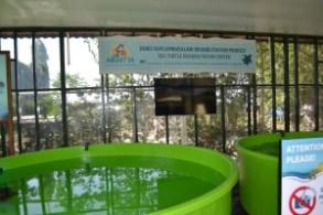 Meritta Turtle Rehabilitation Centre (11)