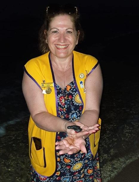 Caretta Sea Turtles 1