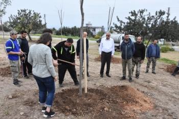 Girne afforestation (4)