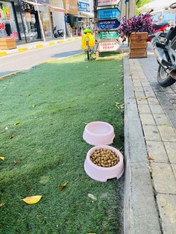 Girne street animal feeding (1)