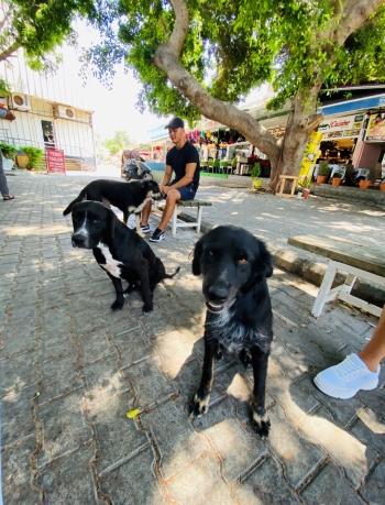 Girne street animal feeding (2)