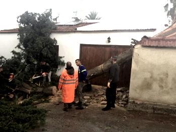 tree damage 2