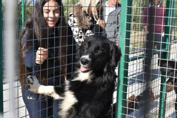 Girne Municipality animal shelter (2)