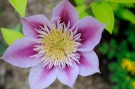 Single Flower 3