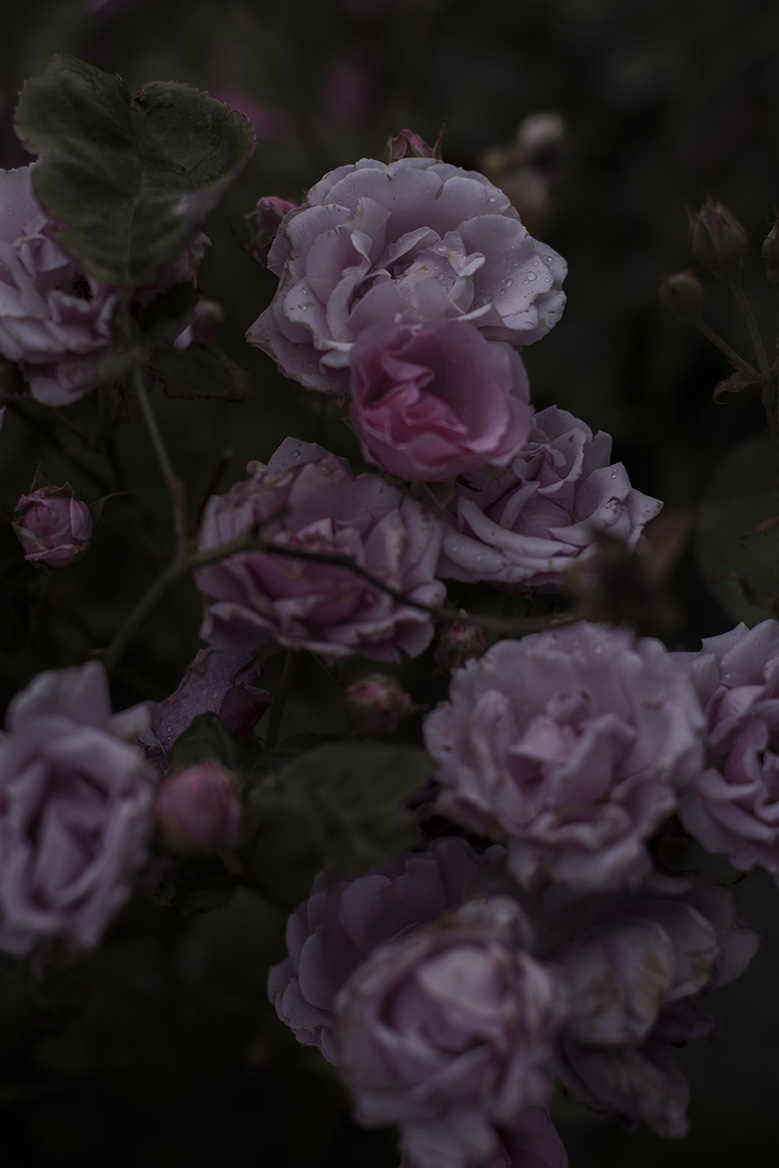 Old age perfume - Veules-les-Roses 2019