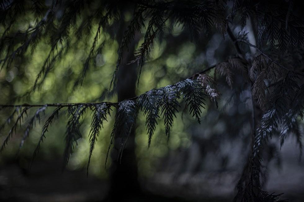 Forest claws - Caen 2019