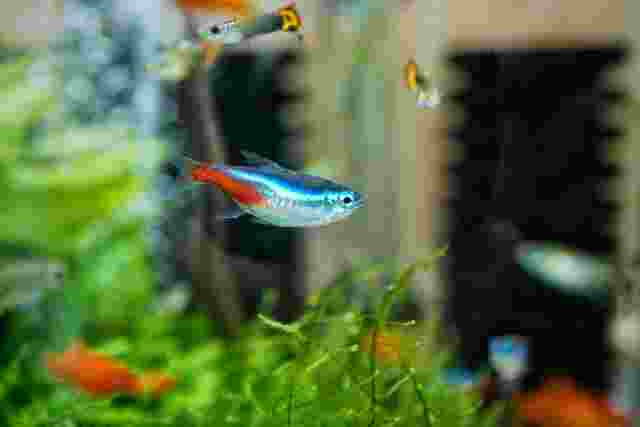 Characteristics, Features and Types of Aquatic Ecosystems
