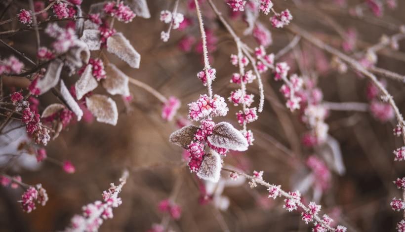 jak dbać o ogród zimą