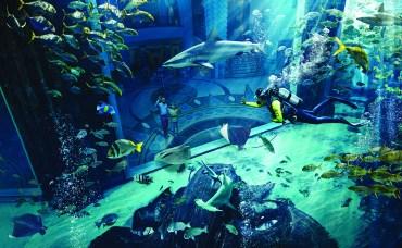 marine_and_waterpark_ambassador_lagoon_07_10_2014_4110