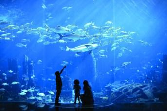 marine_and_waterpark_ambassador_lagoon_30_07_2012_9436hr