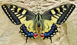 butterfly-1228639_960_720