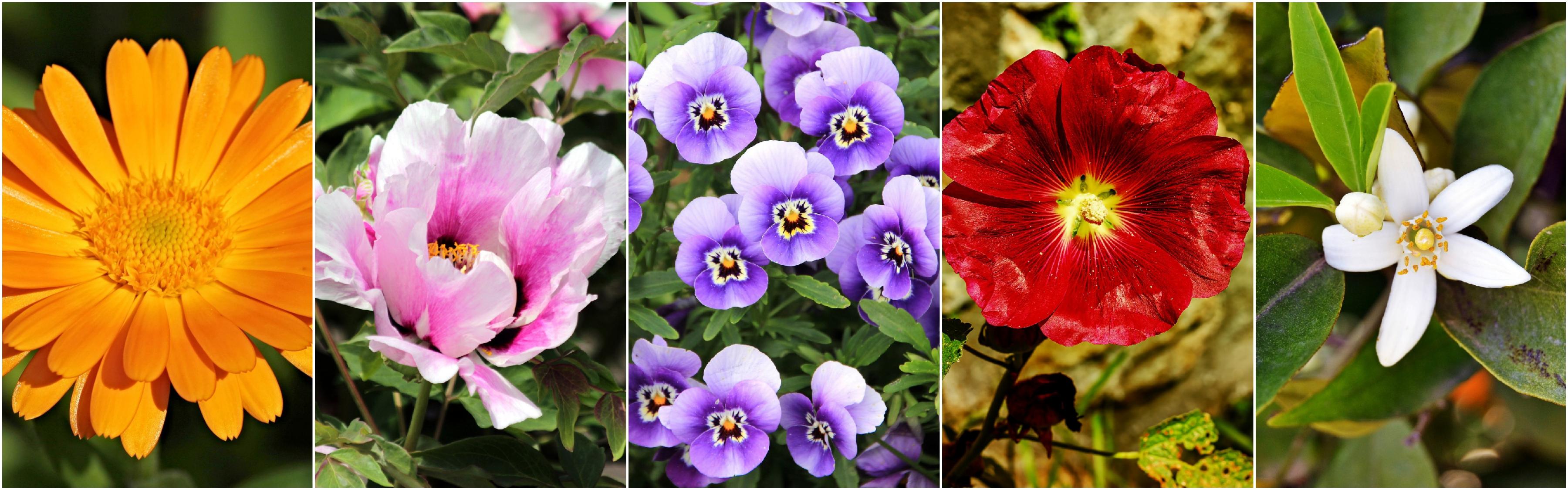nowoczesne wyciągi z kwiatów to hit w kosmetyce