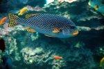 نظام البحث العلمي البحري في المناطق البحرية التابِعة للمملكة العربية السعودية