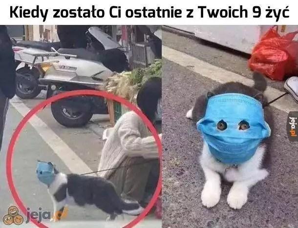 Memy - artykuły | Nowa Trybuna Opolska