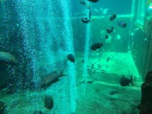 箱根園水族館写真1