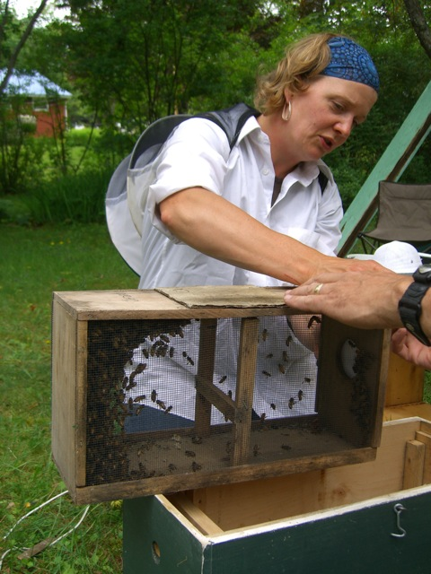 "The bees that were sucked up by the ""bee-vac"""