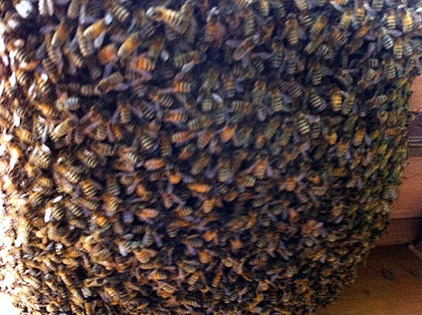 Close up of the Swarm