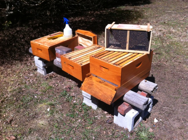 Installing a package of bees.  Empty hive, some sugar water, and a hive tool is just about all you need.