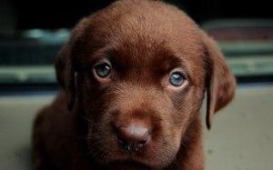 puppy_23