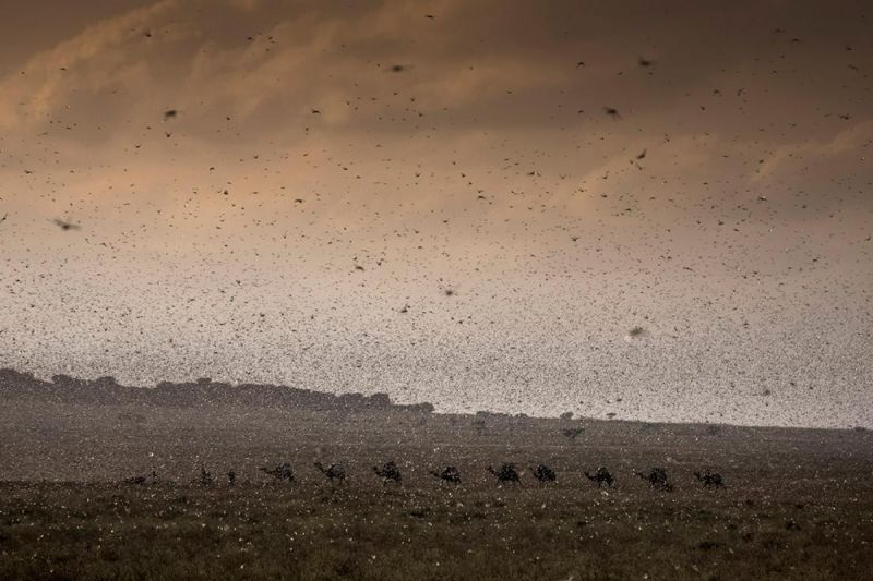 East Africa faces 'alarming situation' with locusts