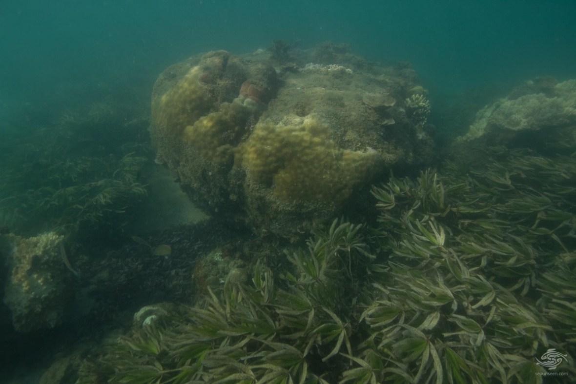 underwater city mafia island  Diver discovers 'African Atlantis' off Tanzania's Mafia Island underwater city mafia island
