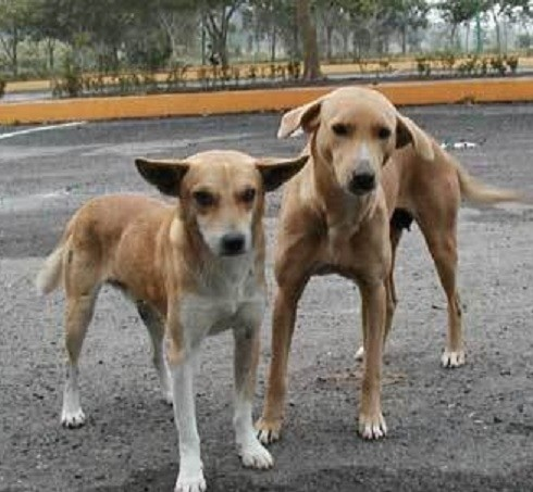 Pack Of Stray Dogs Saves Girl From Rapist In Buenos Aires