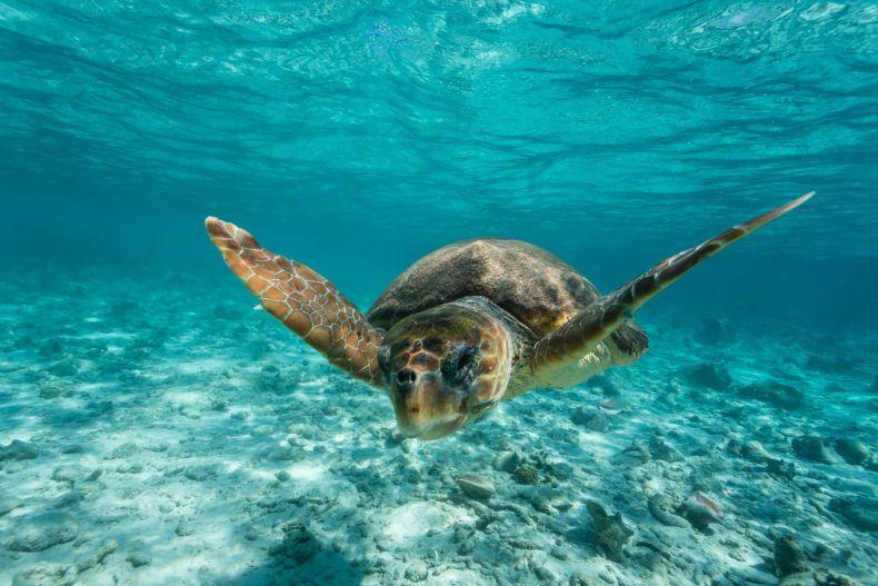 turtle ocean stock getty