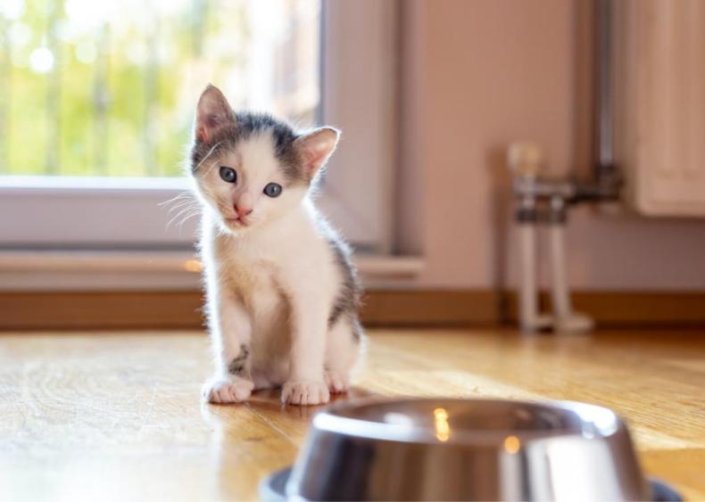 Should kittens drink milk?