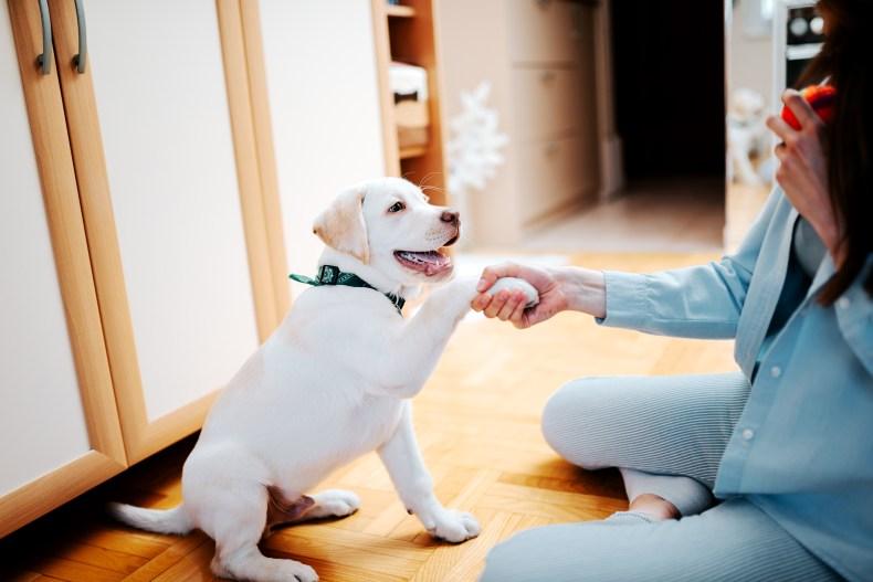 puppy training expert advice
