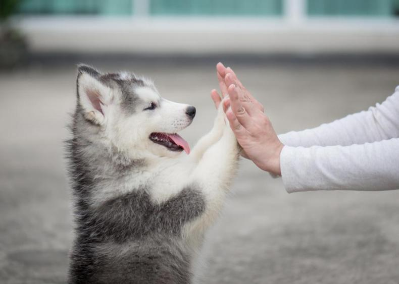 20 ways humans have shaped dogs' evolutionary history