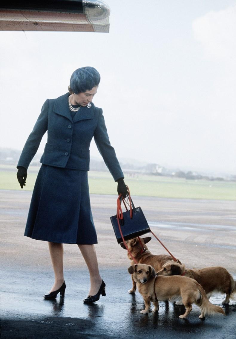 Queen Elizabeth With Corgi at Airport