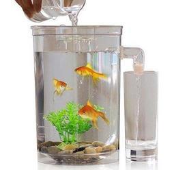 【露天A1店】圓款 懶人魚缸 微景觀生態瓶 辦公室小魚缸 創意魚缸 孔雀魚缸 生態缸 水族箱 - 露天拍賣