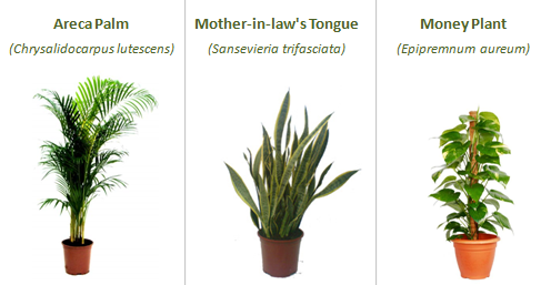 Plants and Indoor Air Quality - InterNACHI