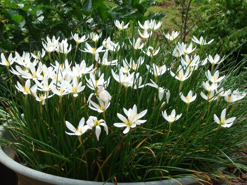 Decorative Pond Plants