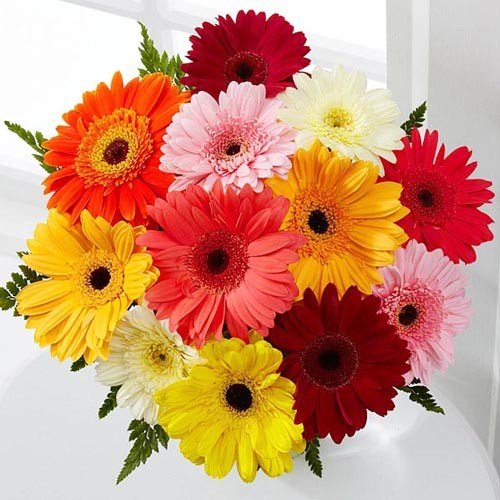Send Colorful Gerberas and make a daisy lover s in Bahrain dream     Colourful Gerberas