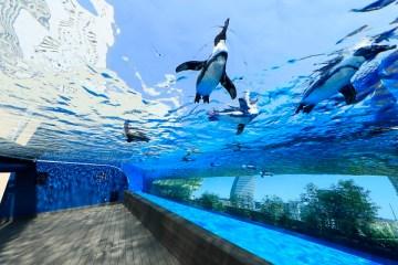 【最大750円割引】サンシャイン水族館+SKYCIRCUSサンシャイン60展望台 セット券 クーポンの写真