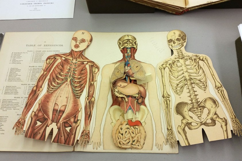 Ten Best Books on Animal and Human Anatomy for Artists ...