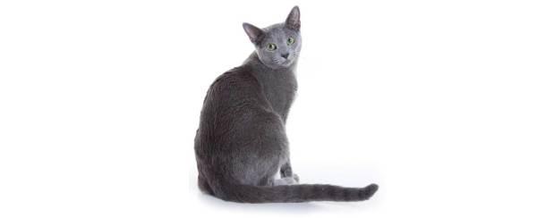 free cat sudbury ontario # 38