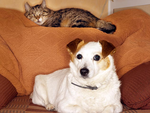 Living With Both Cats And Dogs Petfinder