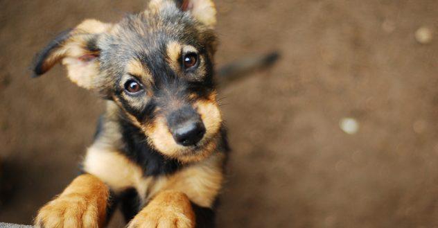 Puppies For Adoption Petfinder