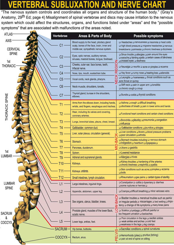 Map Human Thoracic Lumbar Back