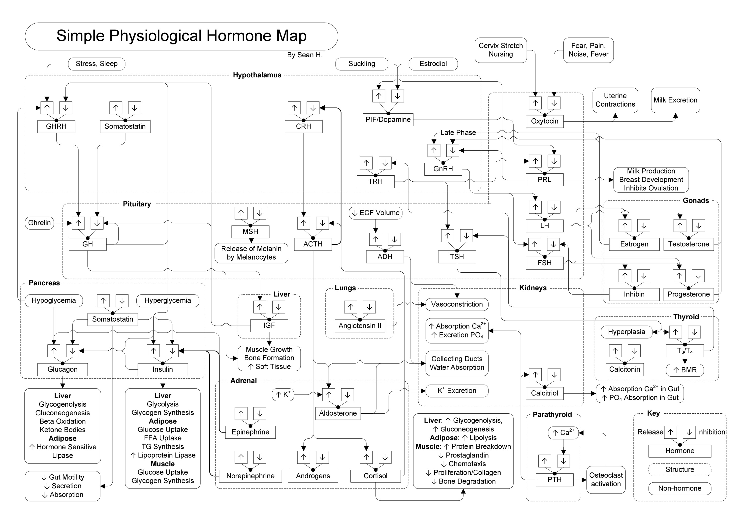 Hormone Map On Meducation