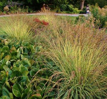 Image result for molinia caerulea subsp. caerulea variegata