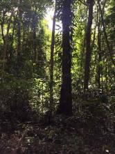 Daintree Rainforest and Mossman Gorge sun filtering